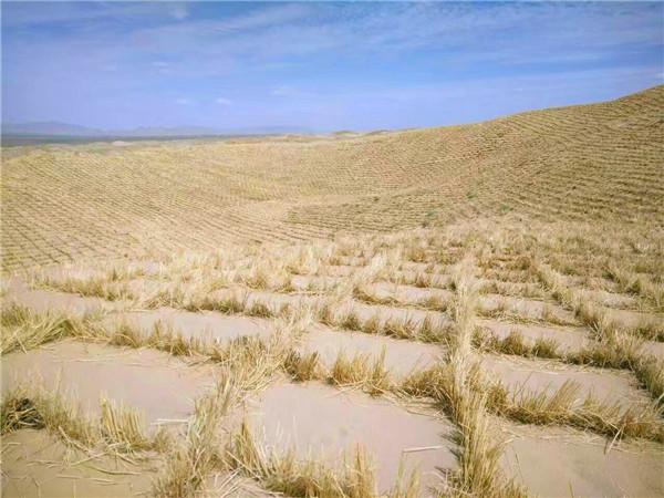 草方格沙障对防沙固沙起到了积极的作用